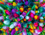The largest florist network in Europe adds Vergic Engage on additional markets